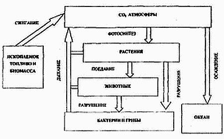 Экология экосистем / Основы