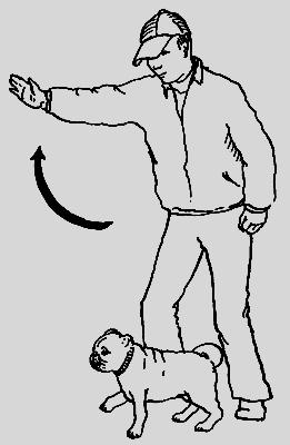 Как дрессировать мопса