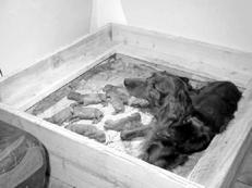 Как вытащить козявки у новорожденного