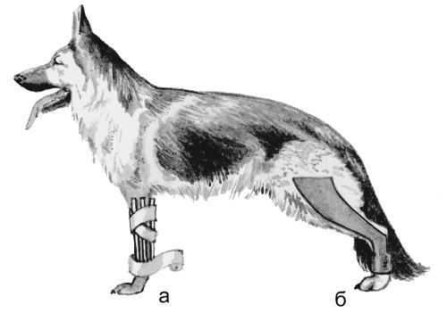 Припухлость суставов и гнойные изьязвления на задних лапах у собак синовиит коленного сустава клиника