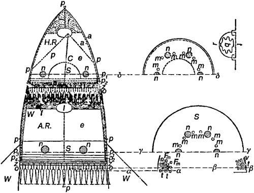 «Модель Е» Германа Оберта: а