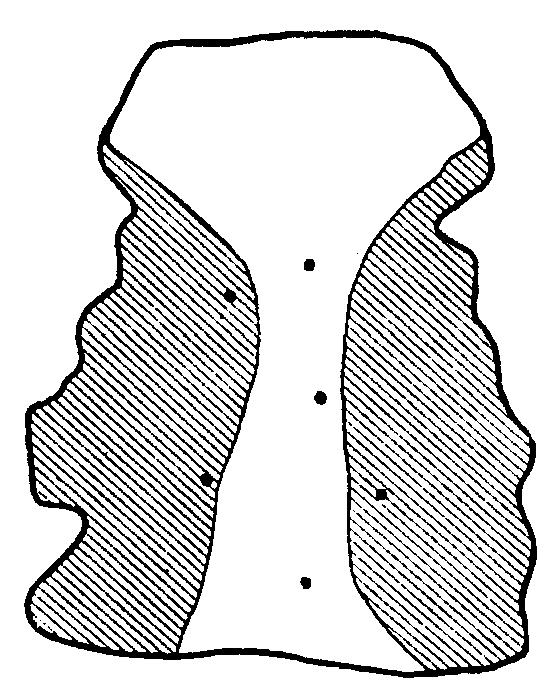 Палаторафия
