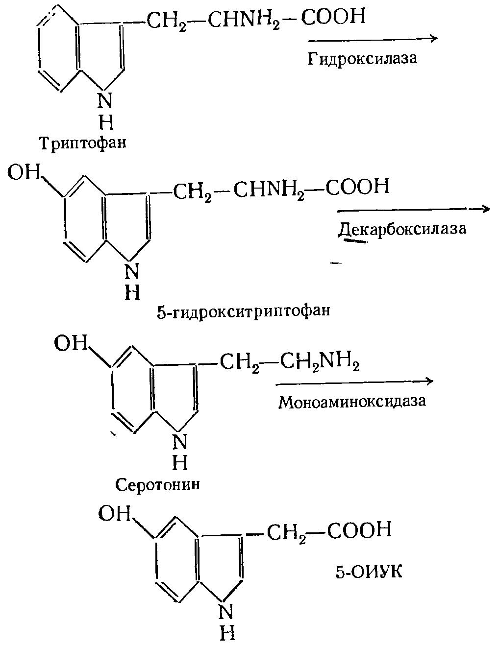 Моноамин оксидаза фото