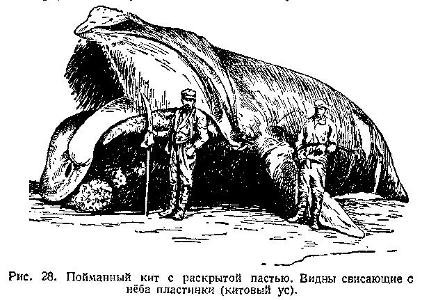10 удивительных фактов о синих китах | ВСЕ ОБО ВСЕМ | Яндекс Дзен | 431x607